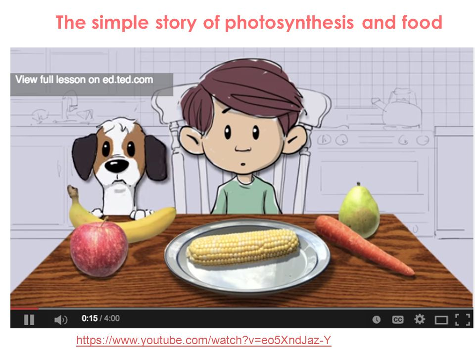 https://www.youtube.com/watch?v=eo5XndJaz-Y The simple story of photosynthesis and food