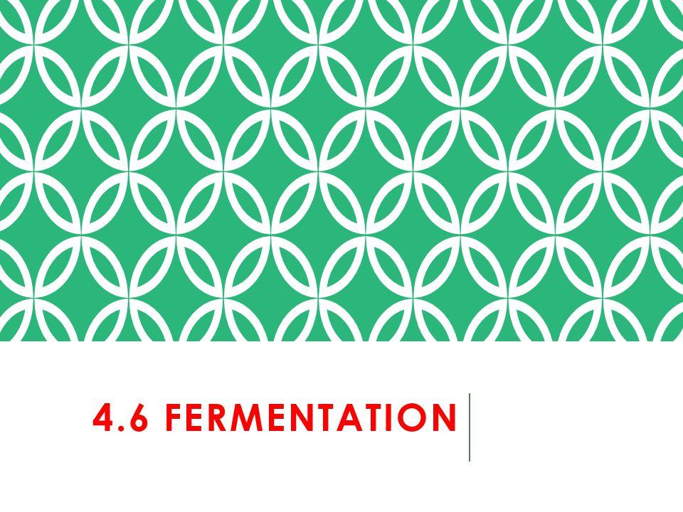 4.6 FERMENTATION