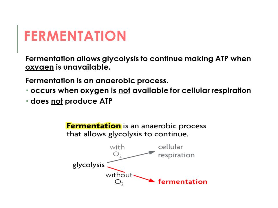 FERMENTATION Fermentation allows glycolysis to continue making ATP when oxygen is unavailable. Fermentation is an anaerobic process.  occurs when oxy