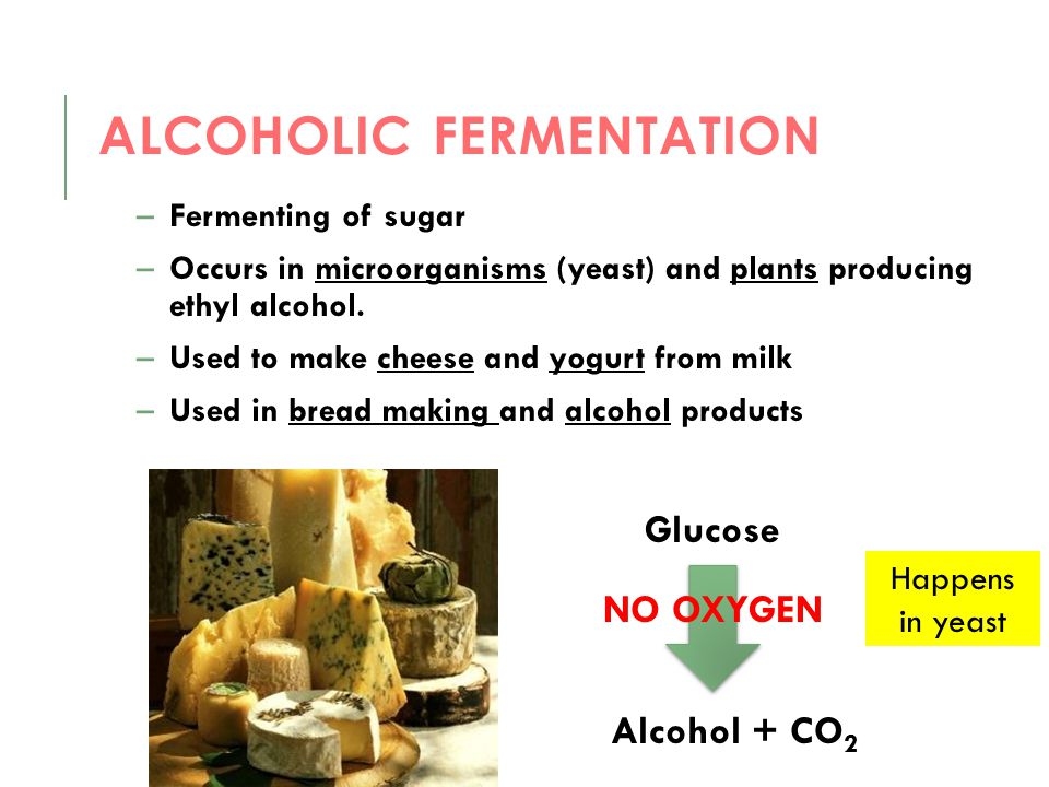 ALCOHOLIC FERMENTATION –Fermenting of sugar –Occurs in microorganisms (yeast) and plants producing ethyl alcohol. –Used to make cheese and yogurt from