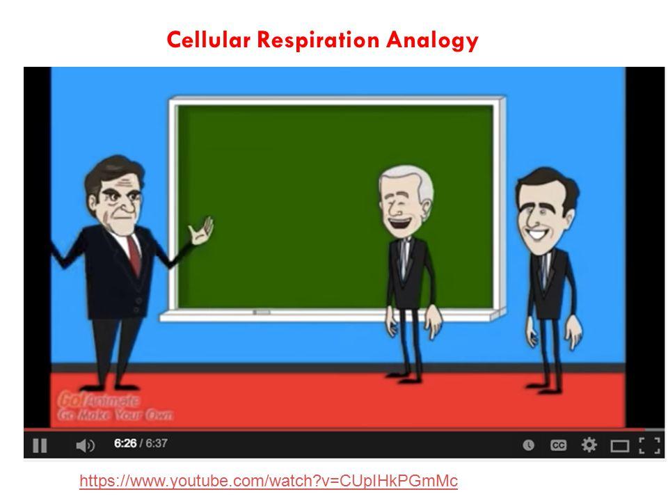 https://www.youtube.com/watch?v=CUpIHkPGmMc Cellular Respiration Analogy