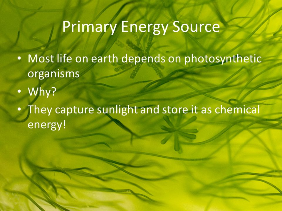 Primary Energy Source Most life on earth depends on photosynthetic organisms Why.