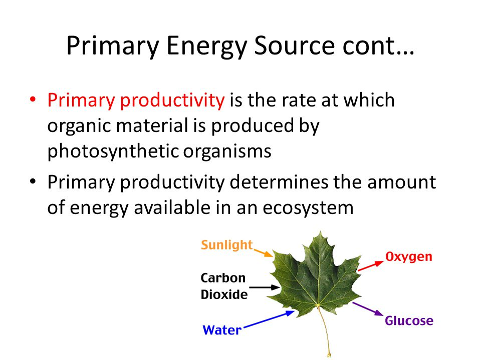 Primary Energy Source cont… Primary productivity is the rate at which organic material is produced by photosynthetic organisms Primary productivity de
