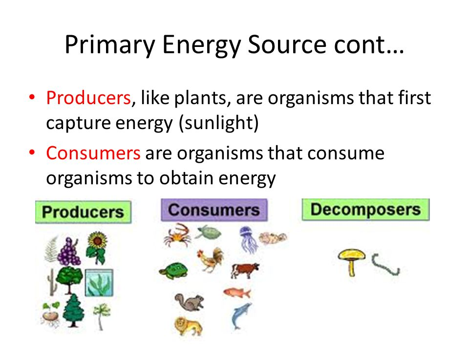 Primary Energy Source cont… Producers, like plants, are organisms that first capture energy (sunlight) Consumers are organisms that consume organisms to obtain energy