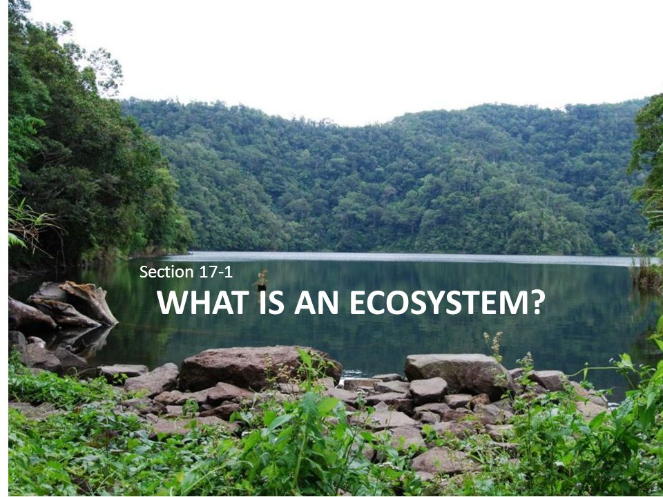 WHAT IS AN ECOSYSTEM? Section 17-1