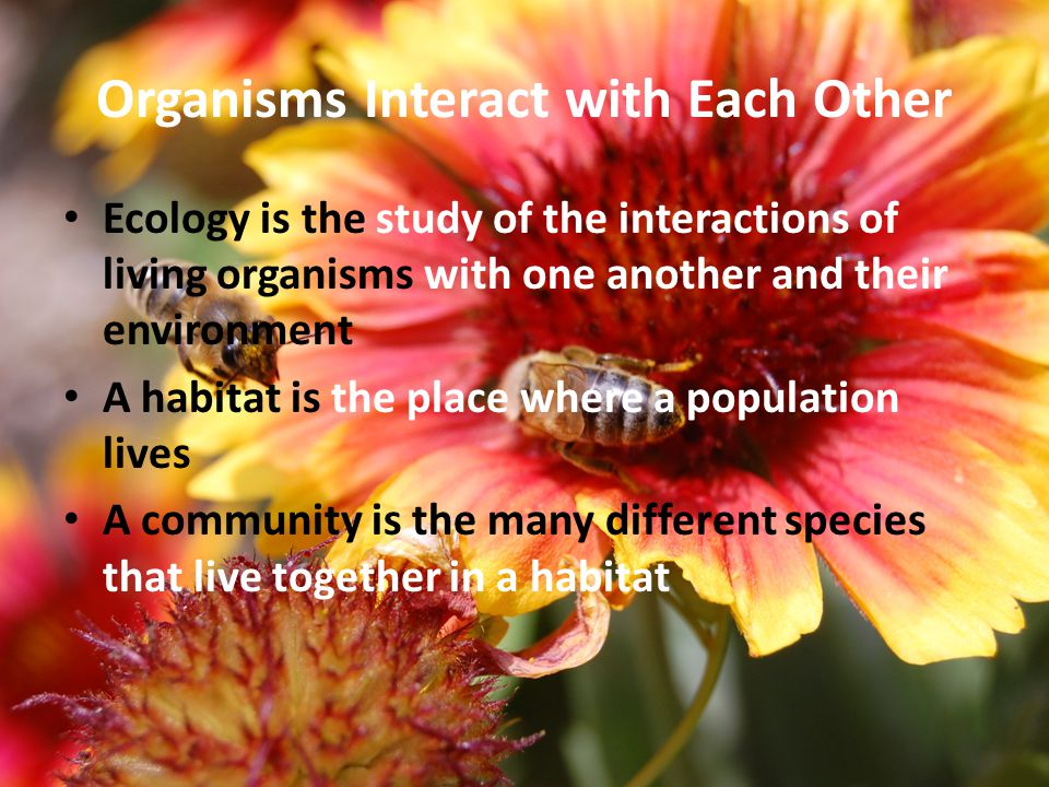 Organisms Interact with Each Other Ecology is the study of the interactions of living organisms with one another and their environment A habitat is the place where a population lives A community is the many different species that live together in a habitat