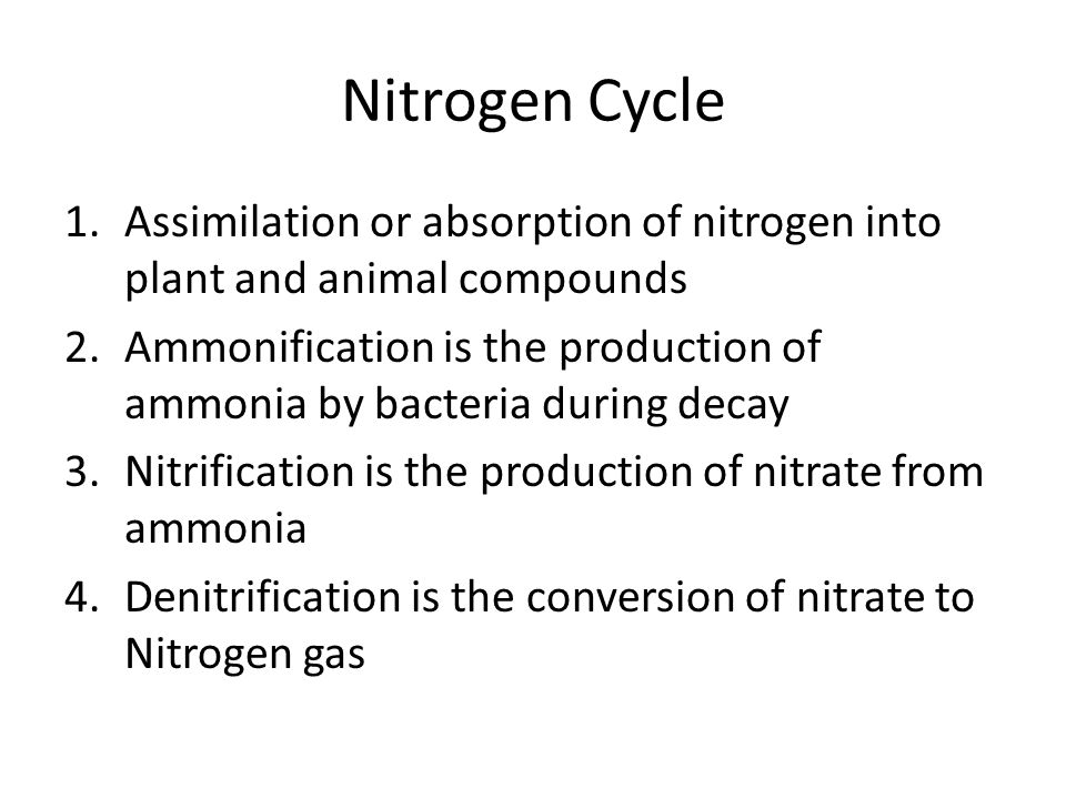 Nitrogen Cycle 1.Assimilation or absorption of nitrogen into plant and animal compounds 2.Ammonification is the production of ammonia by bacteria duri