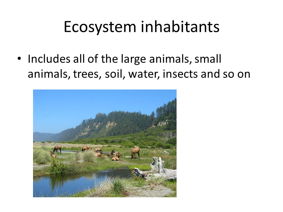 Ecosystem inhabitants Includes all of the large animals, small animals, trees, soil, water, insects and so on