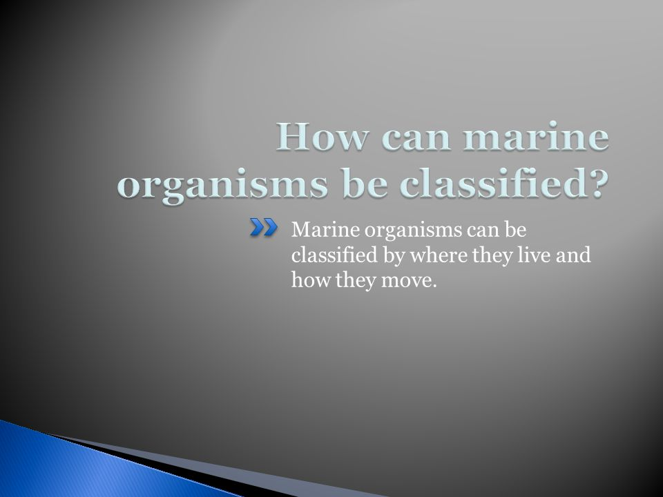 Marine organisms can be classified by where they live and how they move.