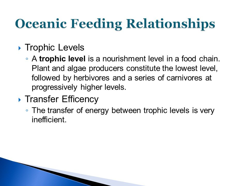  Trophic Levels ◦ A trophic level is a nourishment level in a food chain. Plant and algae producers constitute the lowest level, followed by herbivor