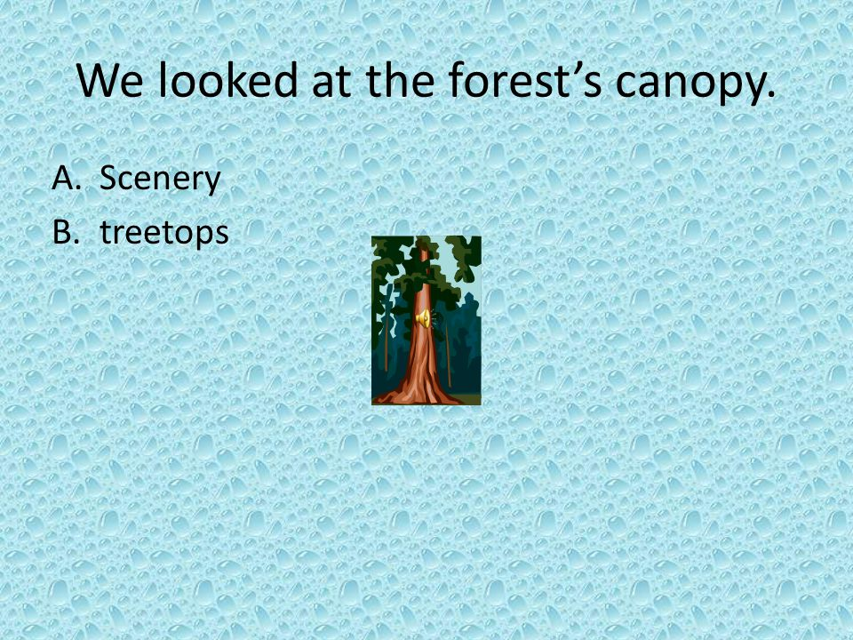 We looked at the forest's canopy. A.Scenery B.treetops
