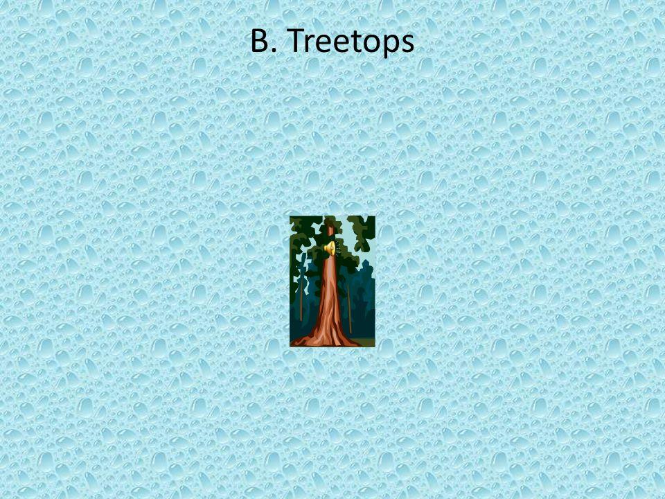B. Treetops