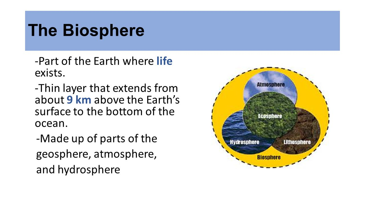 Discovering Earth's Interior -Seismic waves are used to learn about Earth's interior.