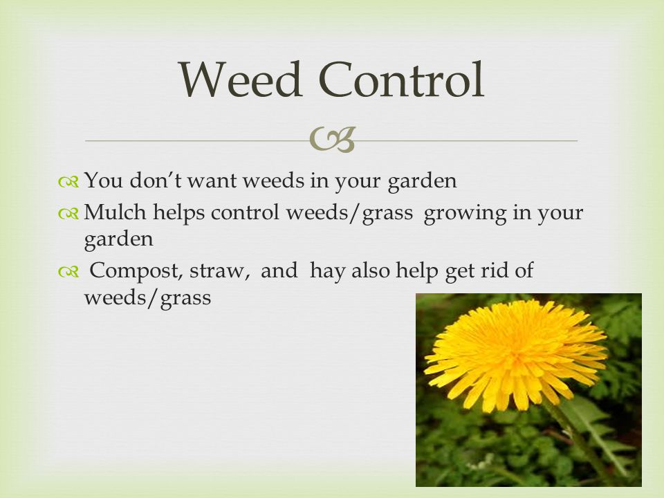   You don't want weeds in your garden  Mulch helps control weeds/grass growing in your garden  Compost, straw, and hay also help get rid of weeds/grass Weed Control