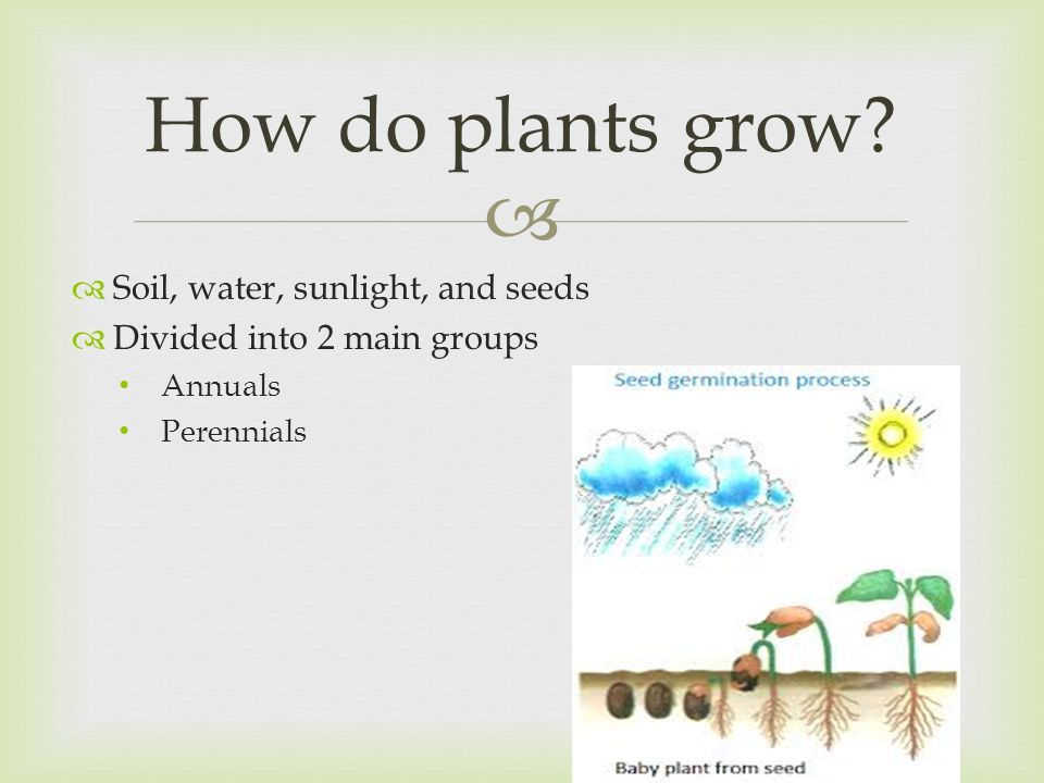   Soil, water, sunlight, and seeds  Divided into 2 main groups Annuals Perennials How do plants grow