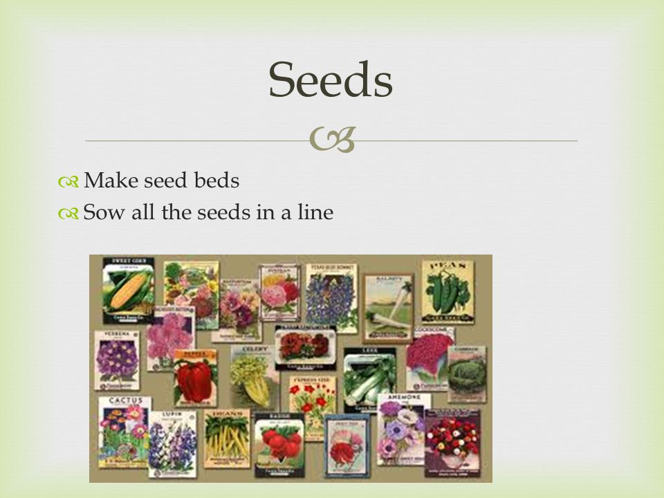   Make seed beds  Sow all the seeds in a line Seeds