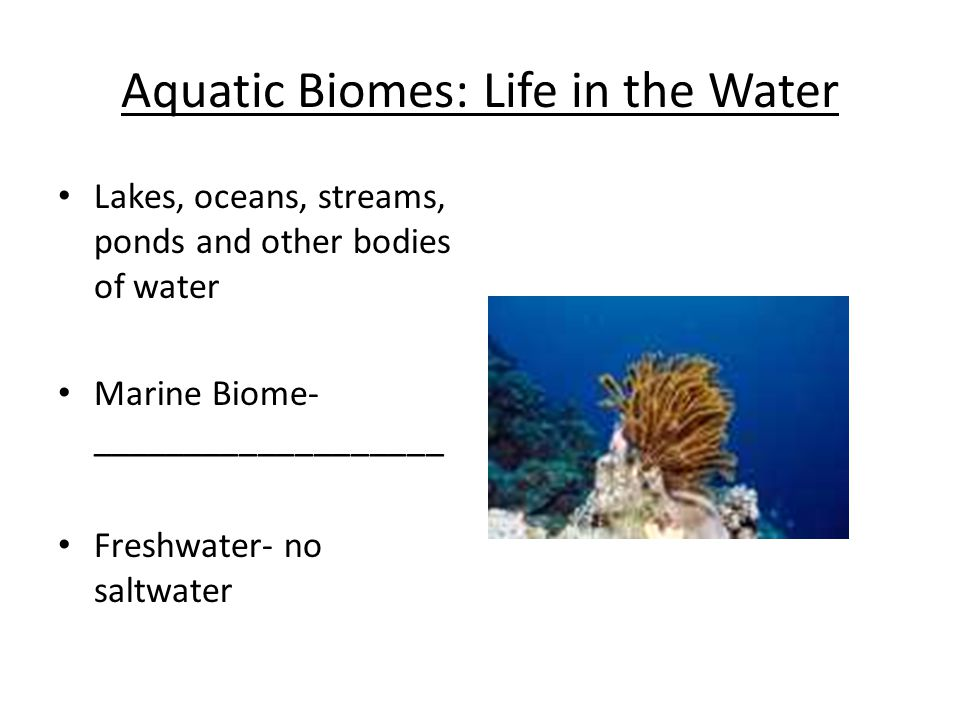 Marine Biome Ocean Life Oceans contain the largest amount of __________ (Living material) than any other biome Ecologists break up the marine biome into 2 Zones 1.Photic Zone 2.Aphotic Zone