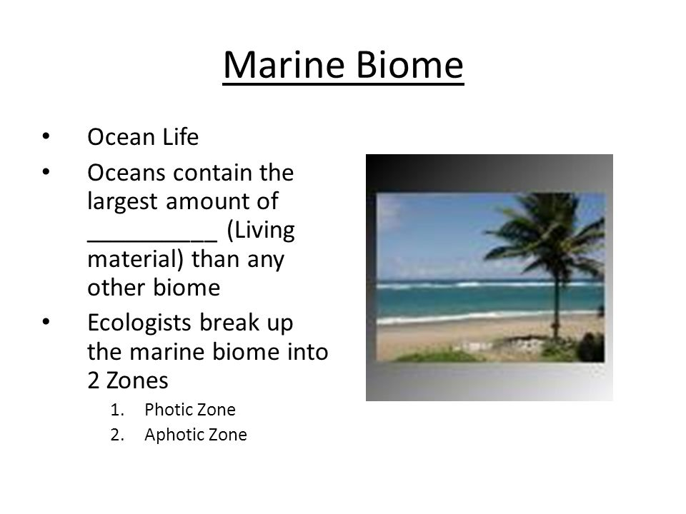 Marine Biome Ocean Life Oceans contain the largest amount of __________ (Living material) than any other biome Ecologists break up the marine biome in