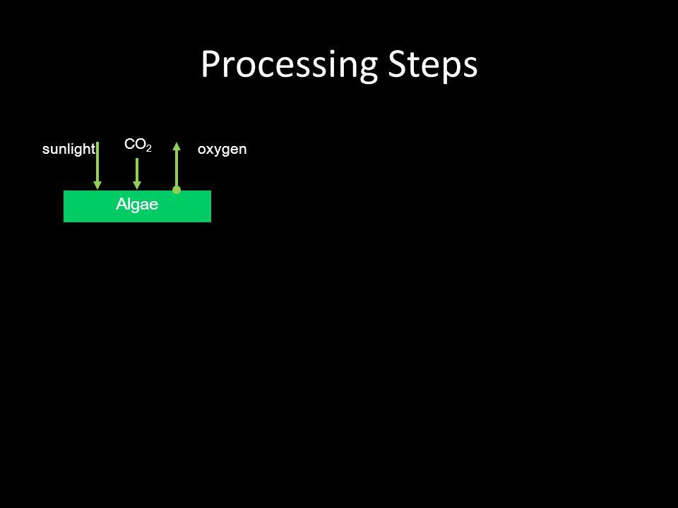 Processing Steps Algae oxygensunlight CO 2