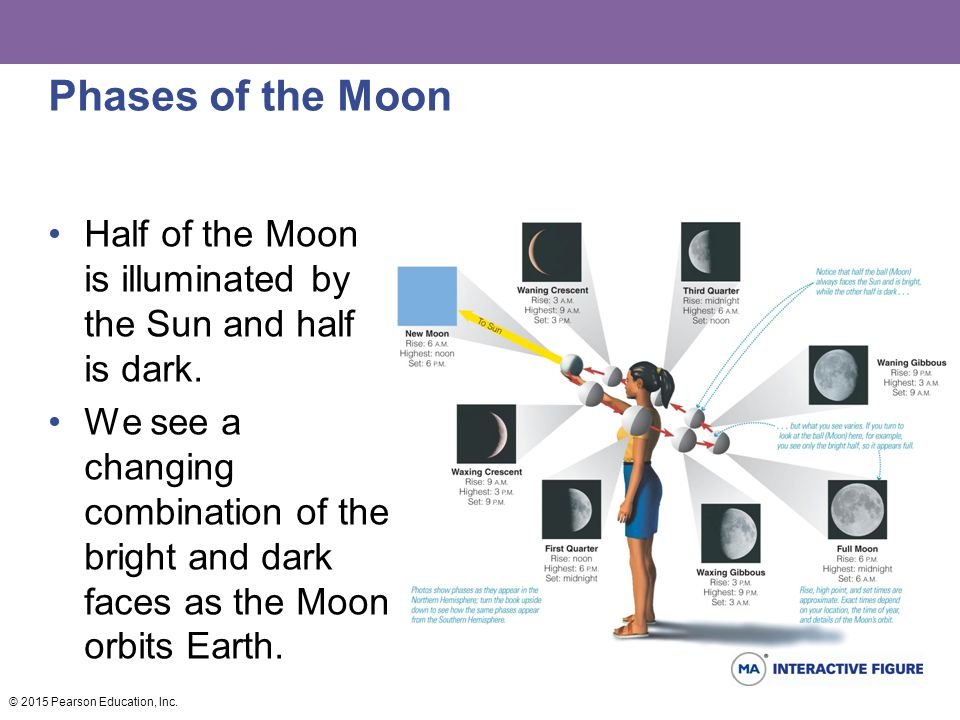 Phases of the Moon Half of the Moon is illuminated by the Sun and half is dark. We see a changing combination of the bright and dark faces as the Moon