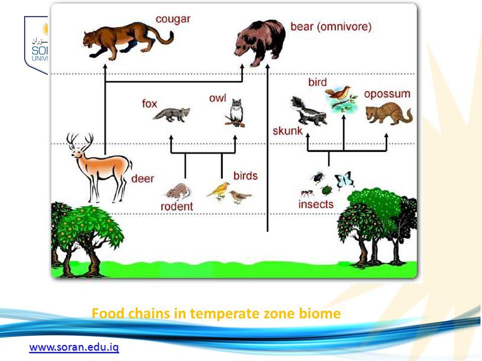 www.soran.edu.iq Food chains in temperate zone biome