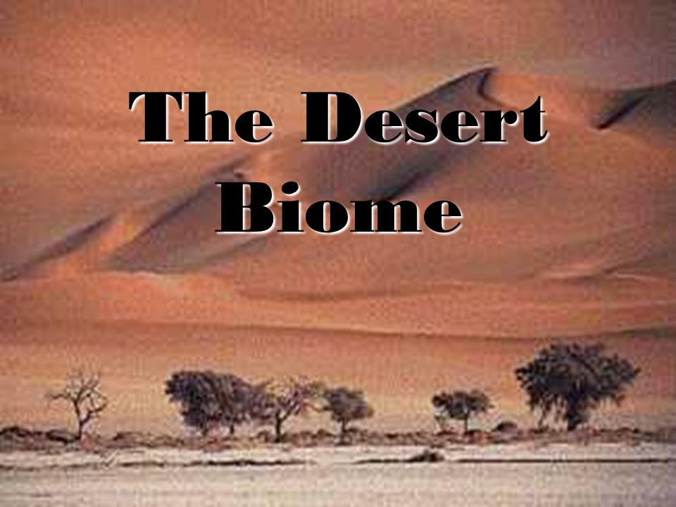 www.soran.edu.iq The Desert Biome