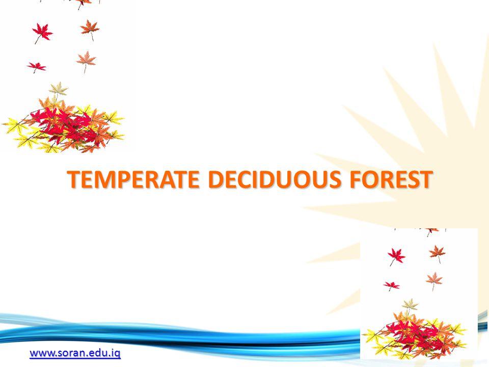 www.soran.edu.iq TEMPERATE DECIDUOUS FOREST