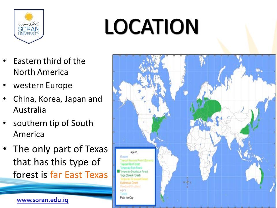 www.soran.edu.iq LOCATION Eastern third of the North America western Europe China, Korea, Japan and Australia southern tip of South America The only part of Texas that has this type of forest is far East Texas