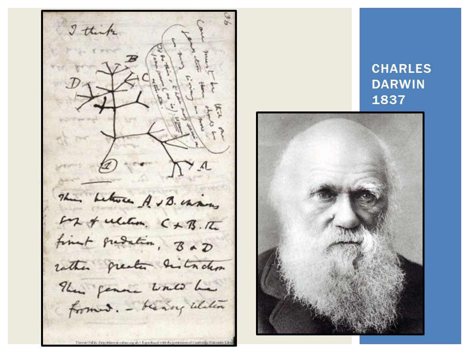 CHARLES DARWIN 1837