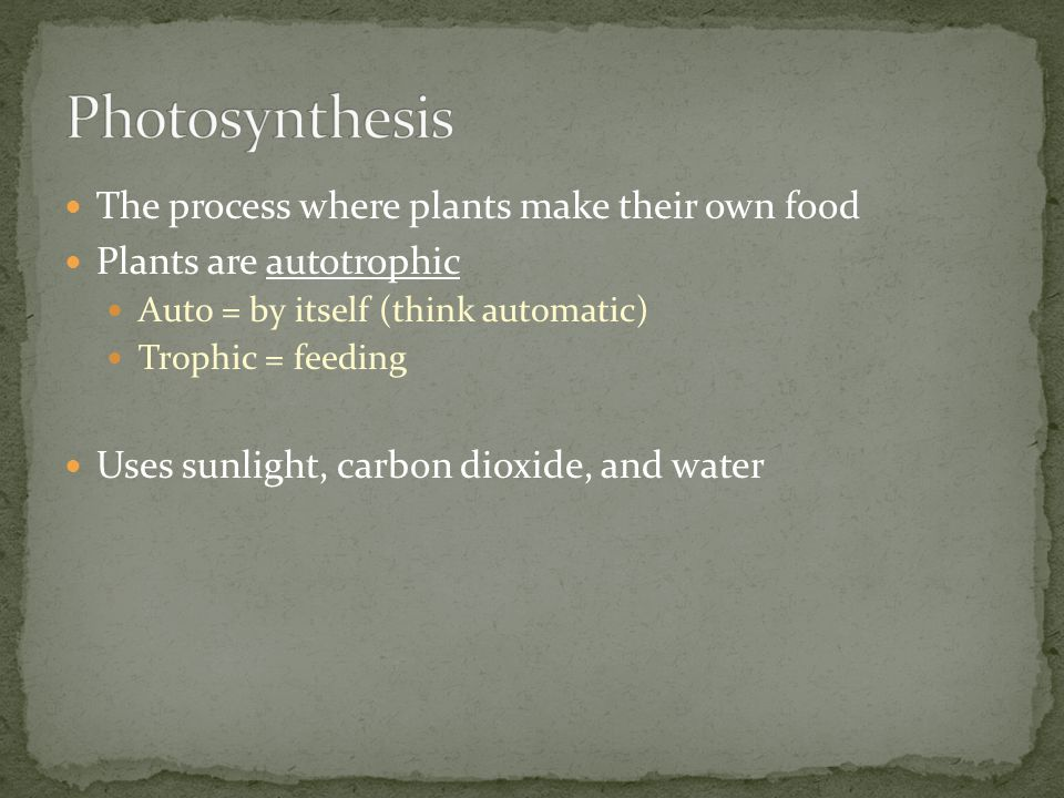 Today we are going to make the reactants for photosynthesis.