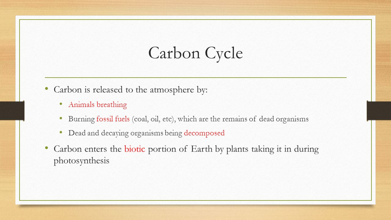 Carbon Cycle Carbon is released to the atmosphere by: Animals breathing Burning fossil fuels (coal, oil, etc), which are the remains of dead organisms