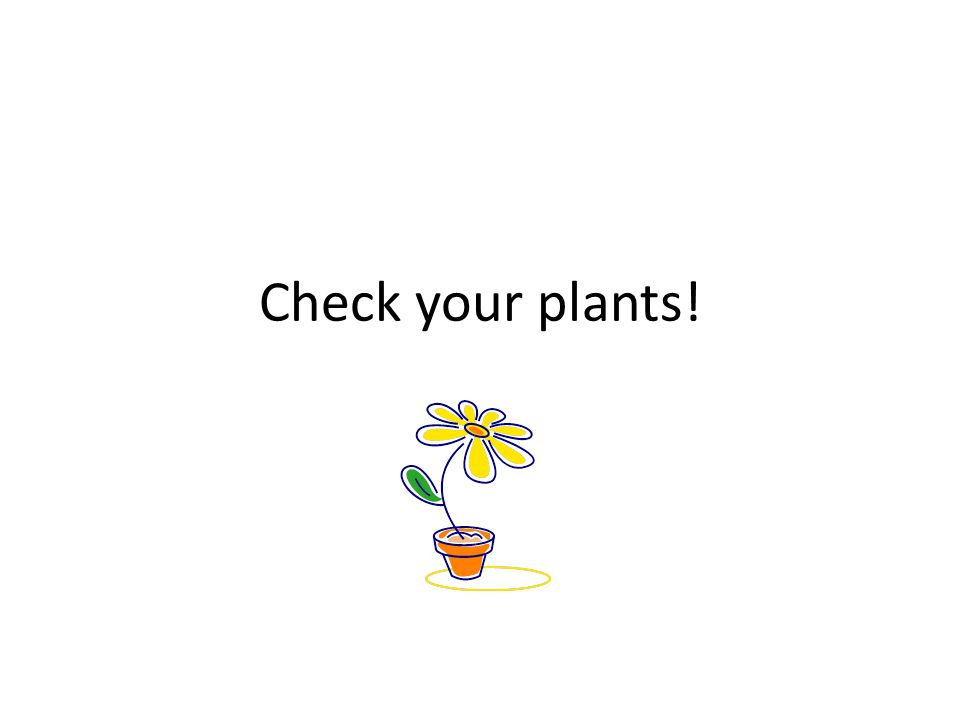 Check your plants!