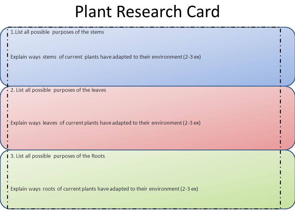Plant Research Card 1.List all possible purposes of the stems Explain ways stems of current plants have adapted to their environment (2-3 ex) 2.