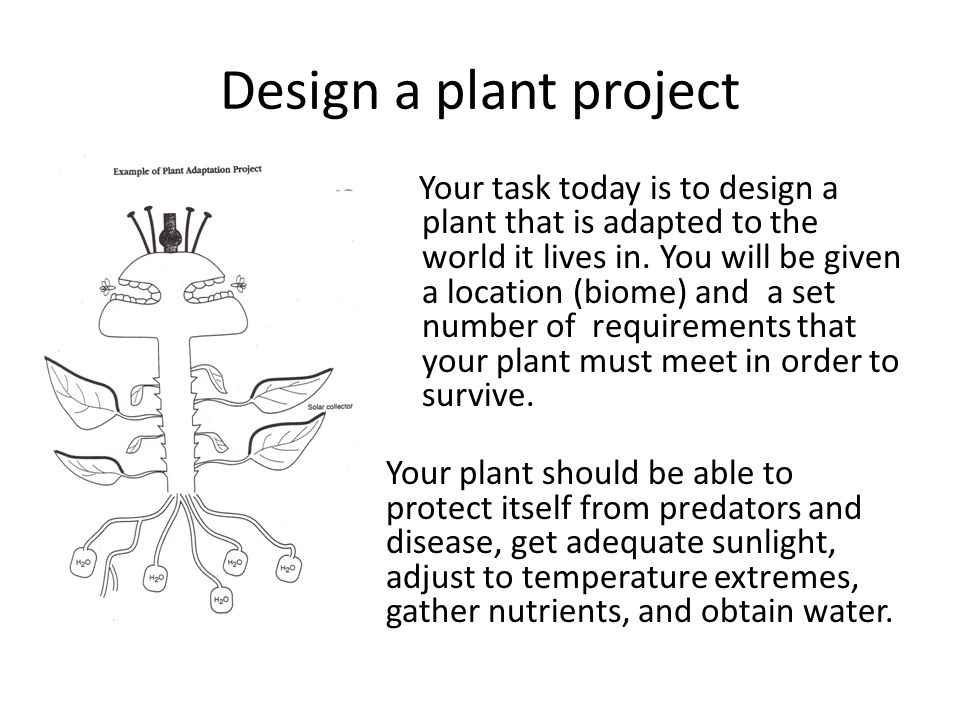 Design a plant project Your task today is to design a plant that is adapted to the world it lives in.