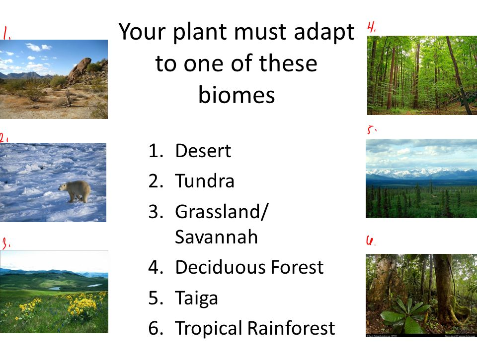 Your plant must adapt to one of these biomes 1.Desert 2.Tundra 3.Grassland/ Savannah 4.Deciduous Forest 5.Taiga 6.Tropical Rainforest