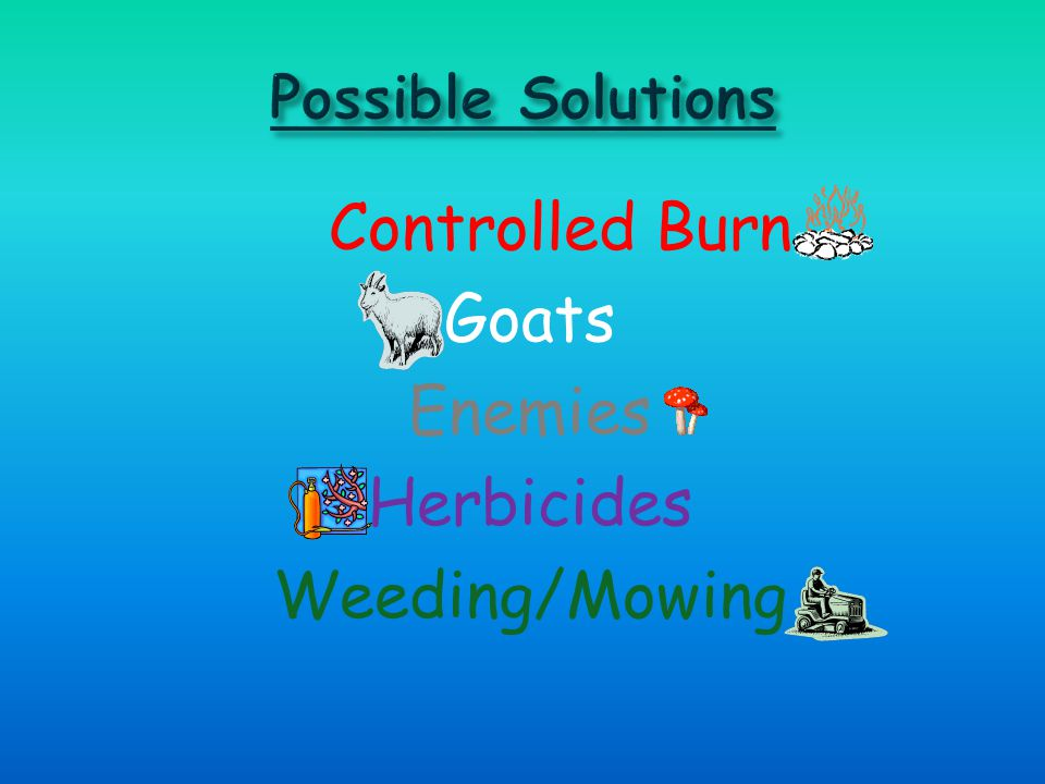 Controlled Burn Goats Enemies Herbicides Weeding/Mowing
