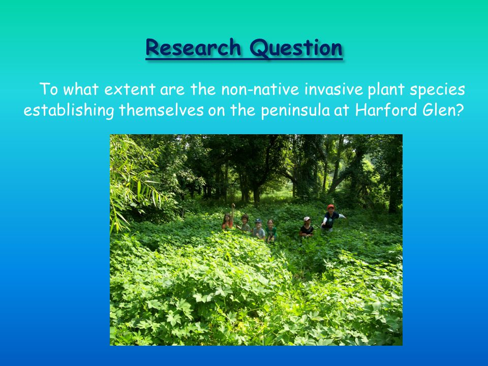 Research Question To what extent are the non-native invasive plant species establishing themselves on the peninsula at Harford Glen