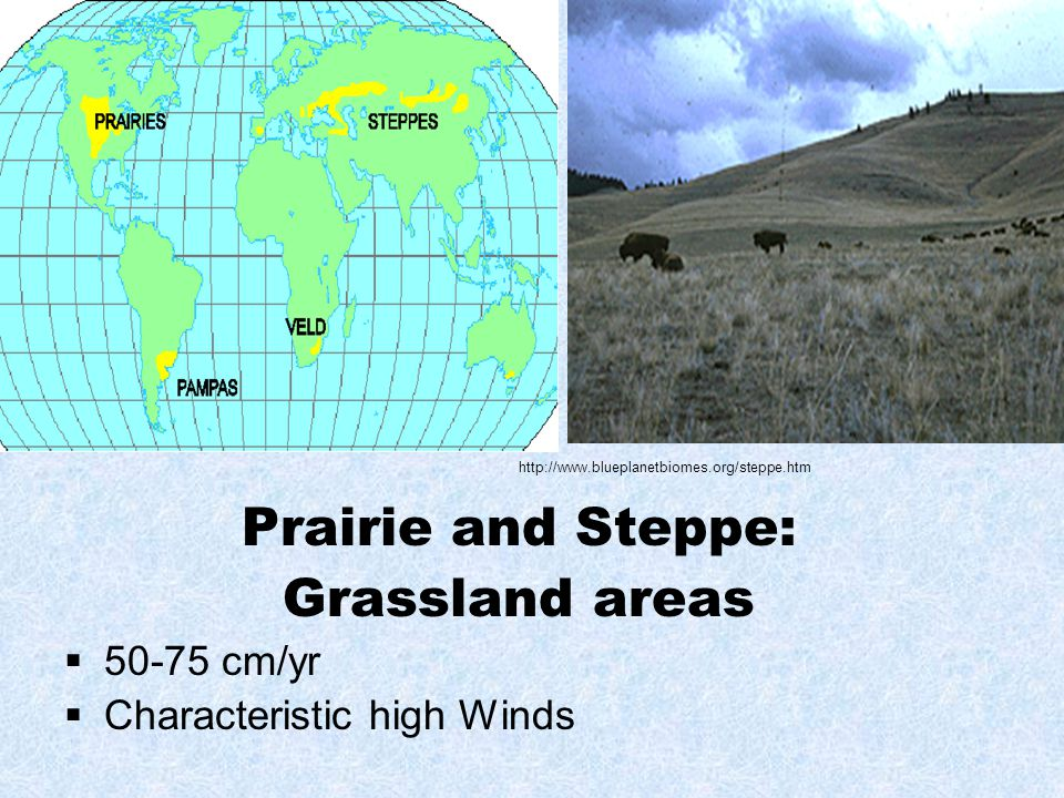 Prairie and Steppe: Grassland areas  50-75 cm/yr  Characteristic high Winds http://www.blueplanetbiomes.org/steppe.htm