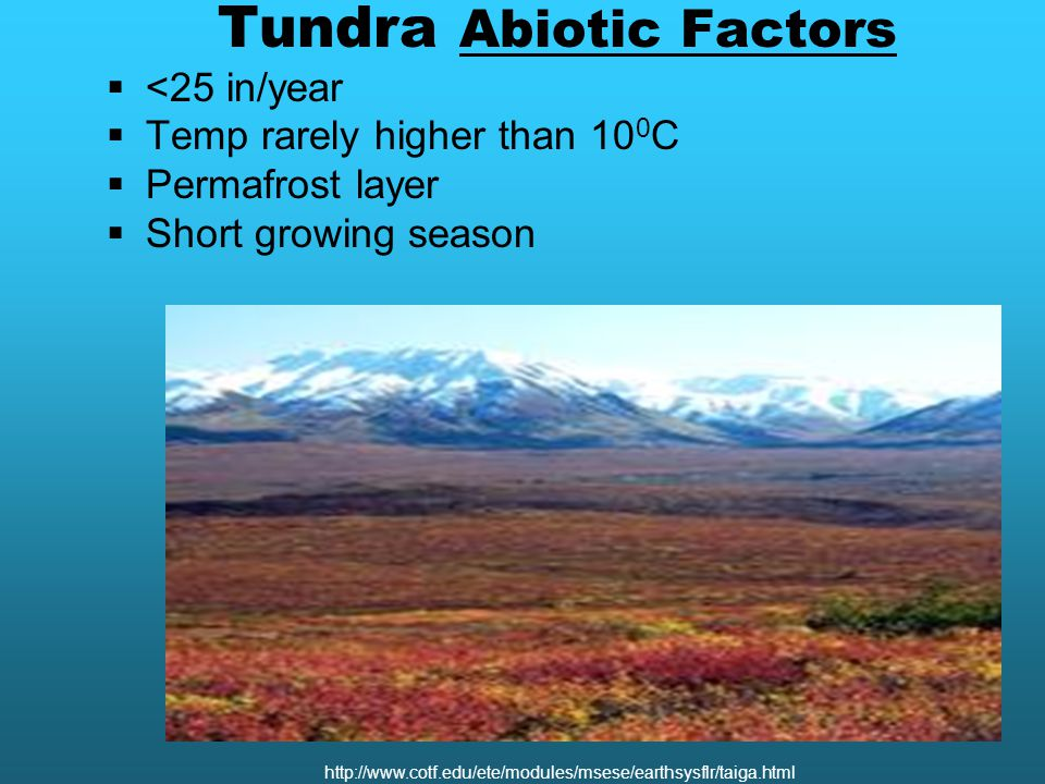 Tundra Abiotic Factors  <25 in/year  Temp rarely higher than 10 0 C  Permafrost layer  Short growing season http://www.cotf.edu/ete/modules/msese/earthsysflr/taiga.html