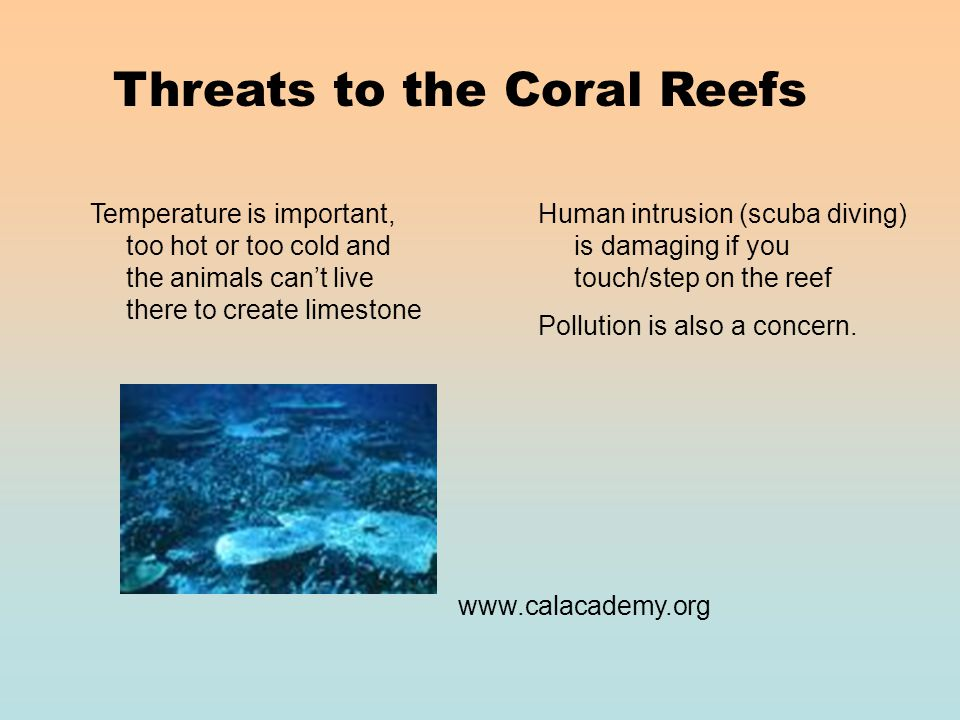 Threats to the Coral Reefs Temperature is important, too hot or too cold and the animals can't live there to create limestone Human intrusion (scuba diving) is damaging if you touch/step on the reef Pollution is also a concern.