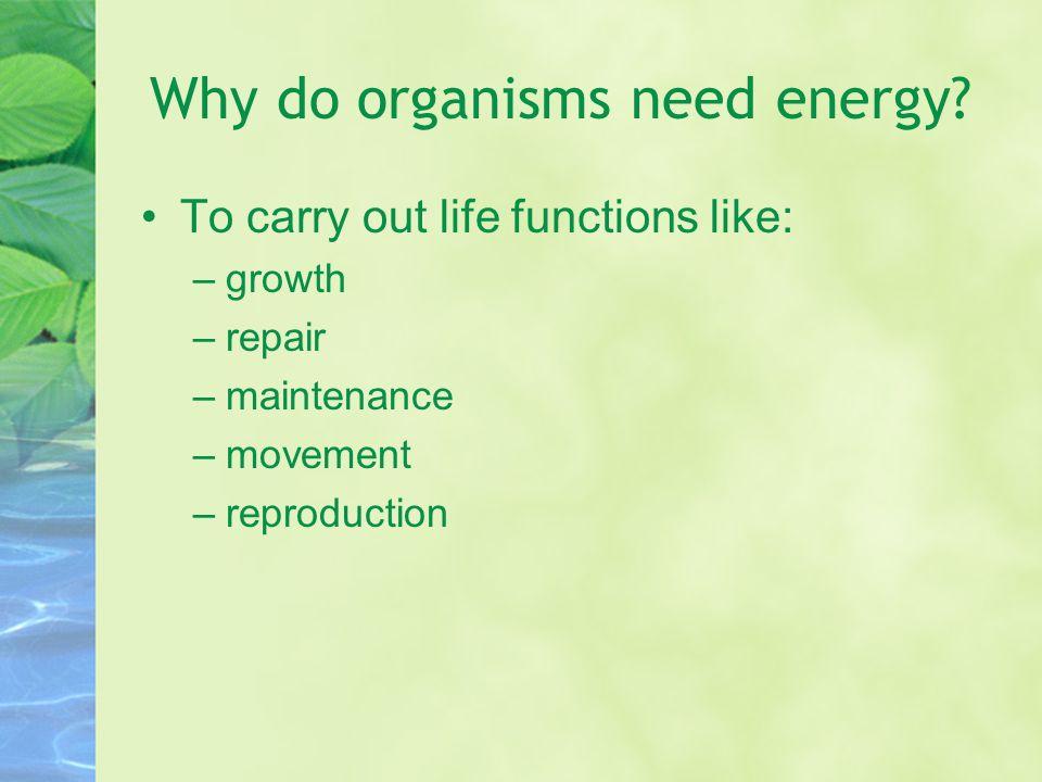 Why do organisms need energy.