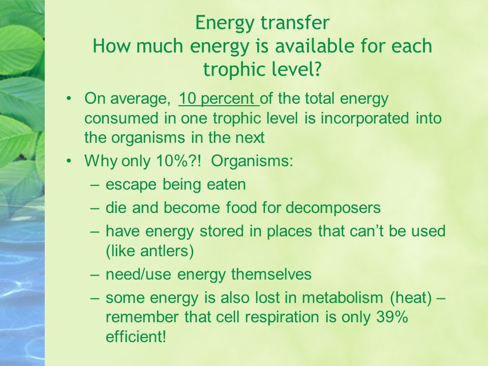 Energy transfer How much energy is available for each trophic level.