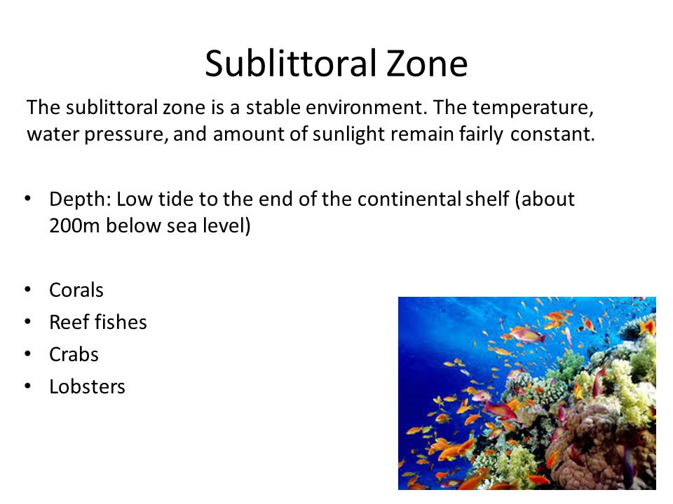 Sublittoral Zone The sublittoral zone is a stable environment. The temperature, water pressure, and amount of sunlight remain fairly constant. Depth: