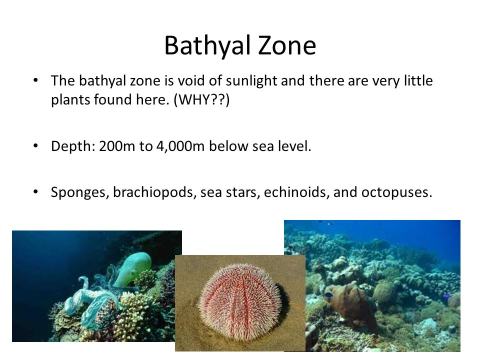 Abyssal Zone The Abyssal zone contains very few plants and animals.