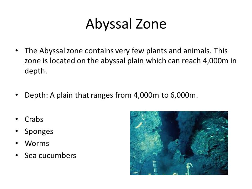 Abyssal Zone The Abyssal zone contains very few plants and animals. This zone is located on the abyssal plain which can reach 4,000m in depth. Depth: