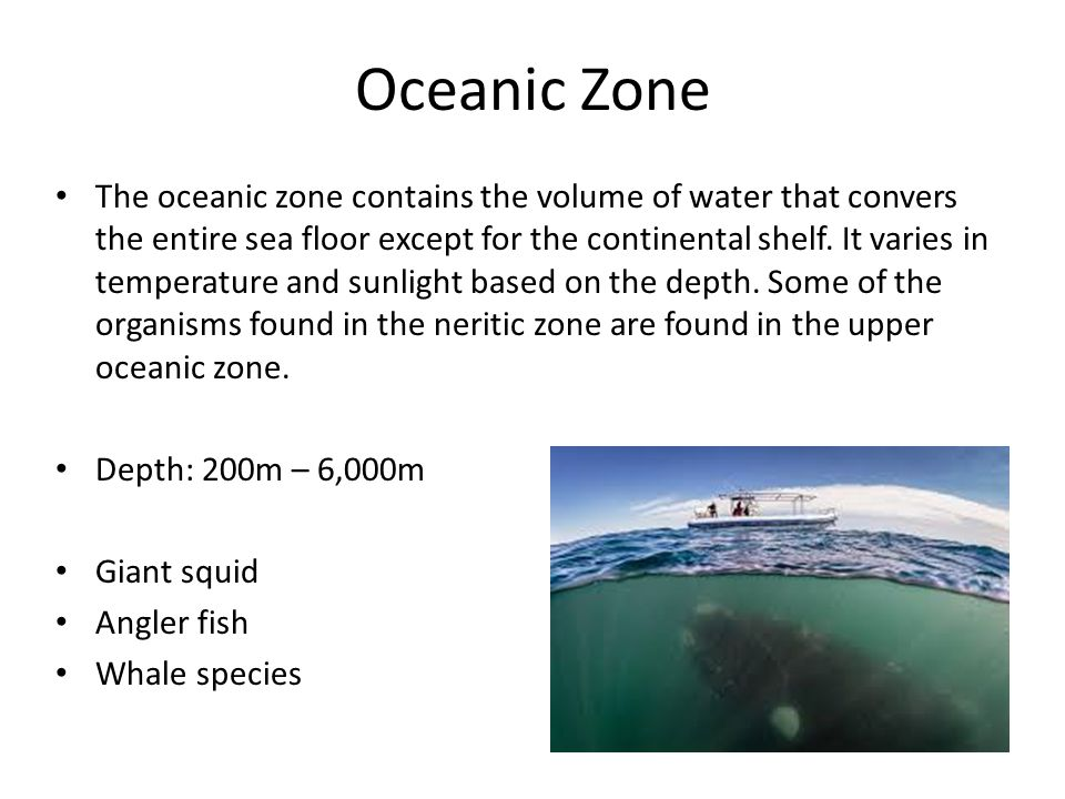 Oceanic Zone The oceanic zone contains the volume of water that convers the entire sea floor except for the continental shelf. It varies in temperatur
