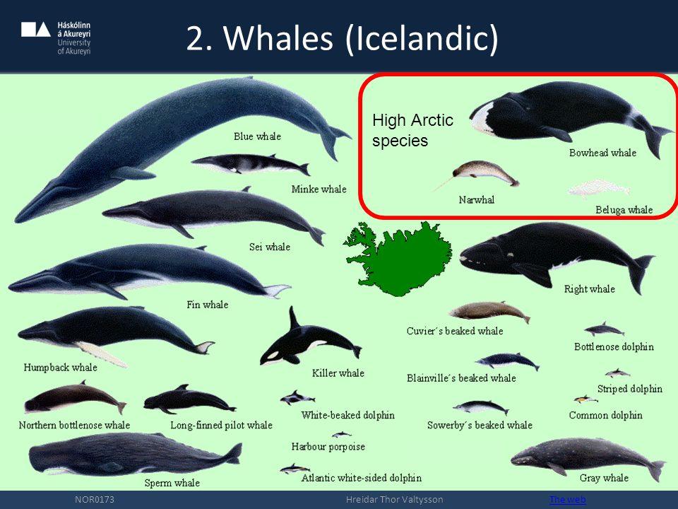 2. Whales (Icelandic) NOR0173 Hreidar Thor Valtysson The webThe web High Arctic species