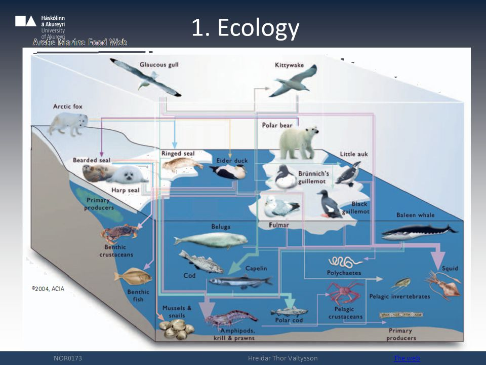 1. Ecology NOR0173 Hreidar Thor Valtysson The webThe web