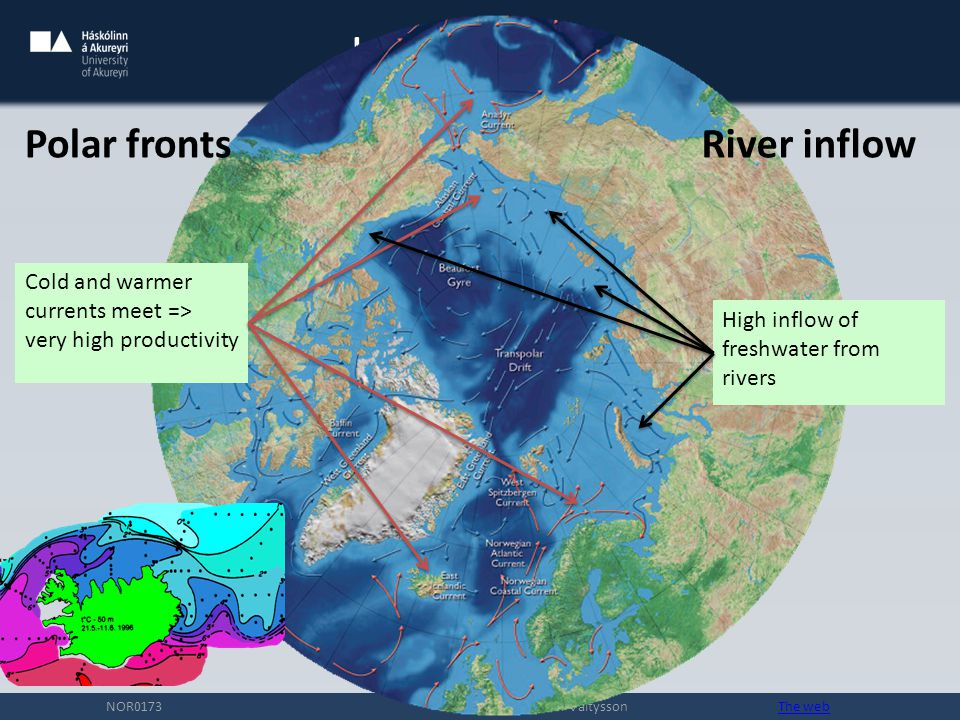 Introduction NOR0173 Hreidar Thor Valtysson The webThe web Cold and warmer currents meet => very high productivity High inflow of freshwater from rivers Polar frontsRiver inflow