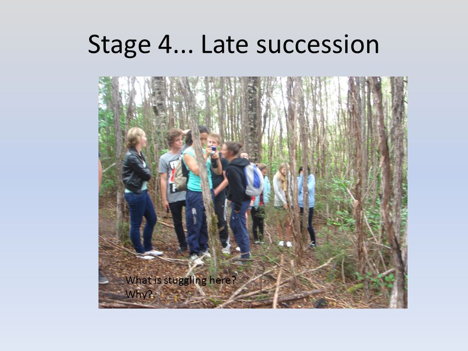 Stage 4... Late succession What is stuggling here? Why?
